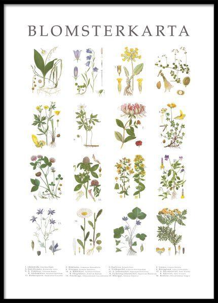 Poster Blomsterkarta