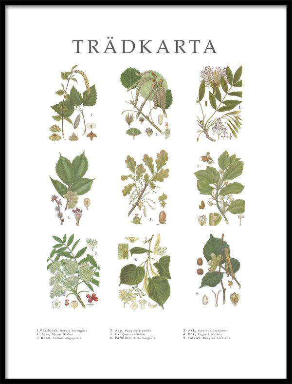 Poster Trädkarta