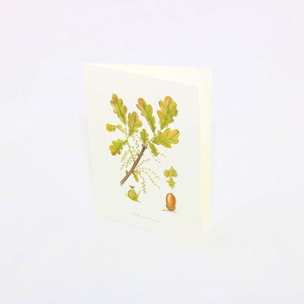 Gratulationskort Ek, Quercus Robur