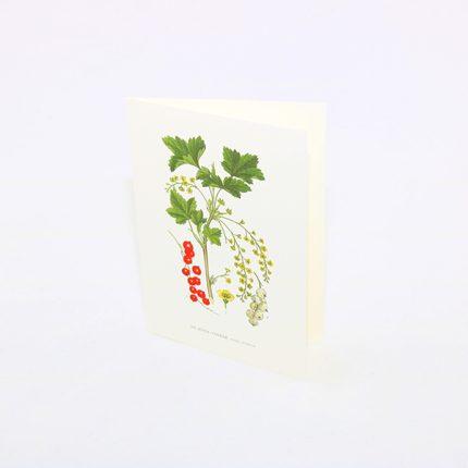 Gratulationskort Röda Vinbär, Ribes Rubrum