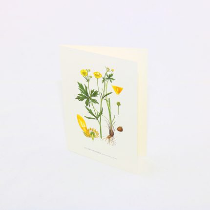 Gratulationskort Smörblomma, Ranunculus Acris