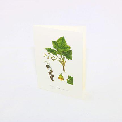 Gratulationskort Svarta Vinbär, Ribes Nigrum