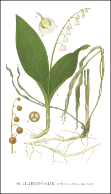 Tändsticksask - Liljekonvalj